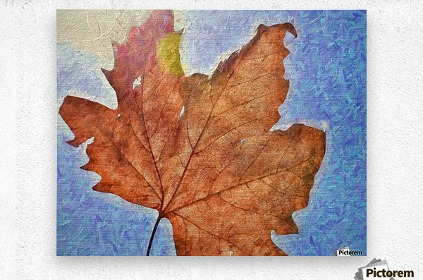 Autumn Leaves Macro 3 Abstract 3  Metal print