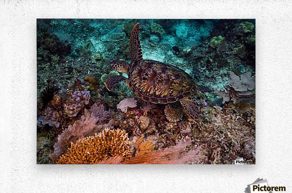 Clean turtle  Metal print