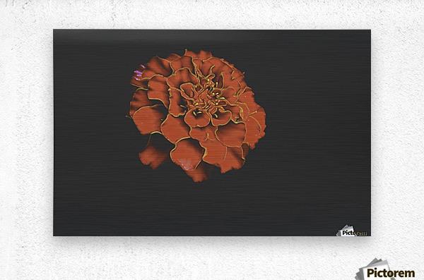 Carnation Bliss  Metal print