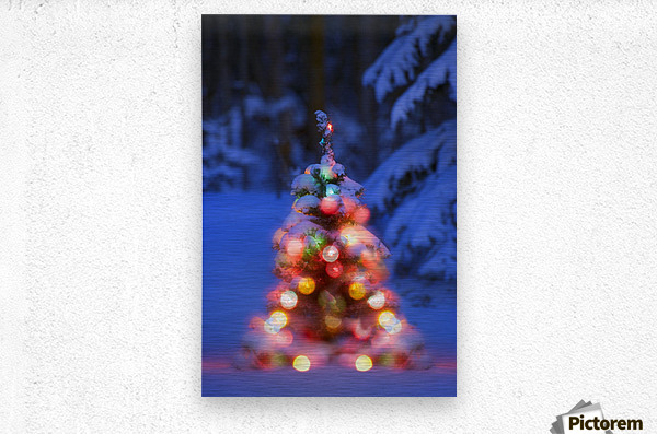Illuminated Christmas Tree In A Forest  Metal print