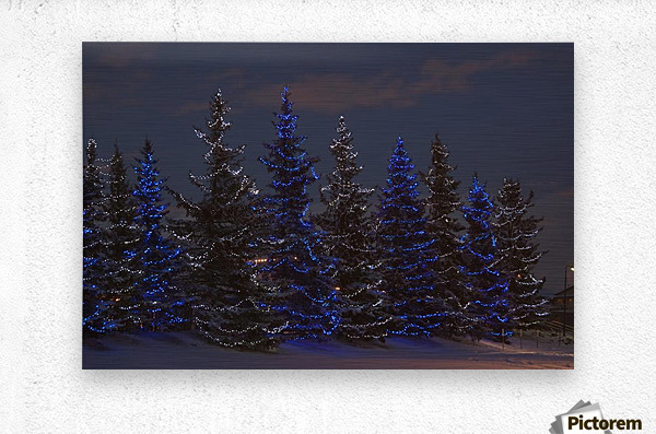 Calgary, Alberta, Canada; A Row Of Evergreen Trees With Christmas Lights  Metal print