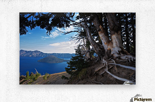 Crater Lake & Gnarled White Pine  Metal print