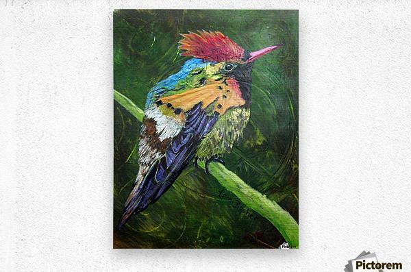 Tufted Coquette Hummingbird  Metal print