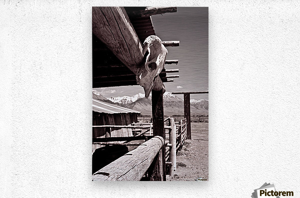 ©lou Freeman Wild West Cowboy Art 1020 21  Metal print
