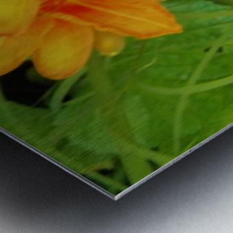 Oranger Lilly 2 Metal print