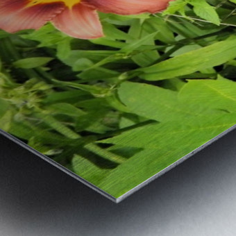 Oranger Lilly 4 Metal print