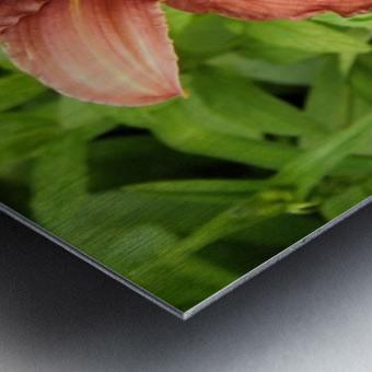 Oranger Lilly 3 Metal print