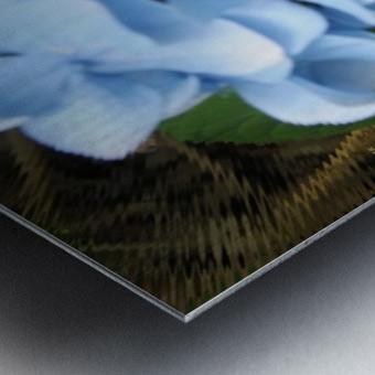 Hydrangea Impression metal
