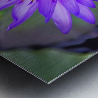 waterflower Metal print