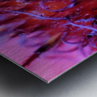 Sun Flower Macro Metal print