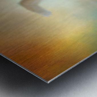 Swan Wings Metal print