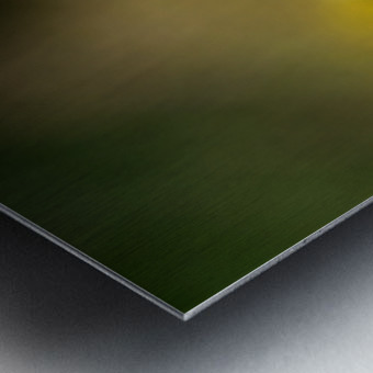 0017- Monarch Meal Metal print