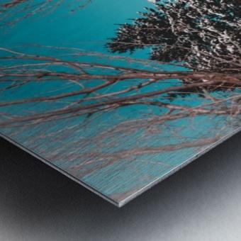 Snowy Pine Trees Metal print