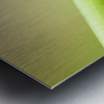 Snail on green stem Metal print