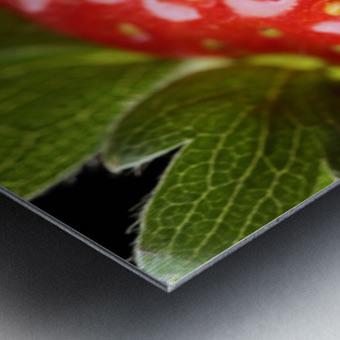 Fresh strawberry close-up Metal print