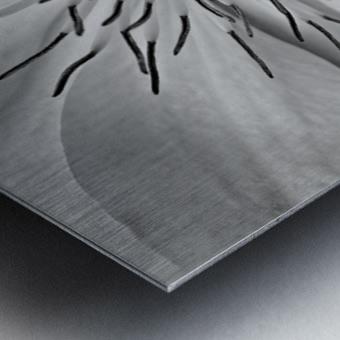Clematis White Metal print