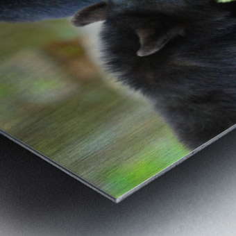 3541- Black bear Metal print