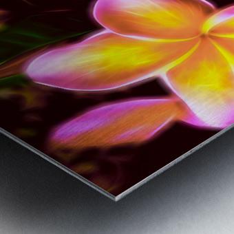 Frangipanis On The Glow Metal print
