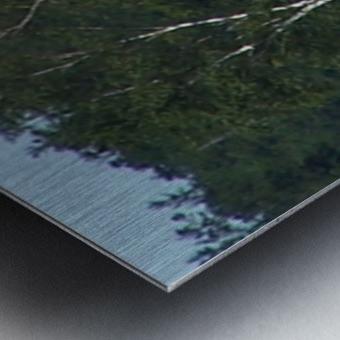 Sasquatch1 Metal print