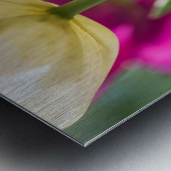 Under The Tulips - Sous Les Tulipes Metal print