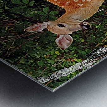 FawnBySaltBlock3 Metal print