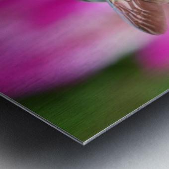 Bee On Pink Flower Photograph Metal print