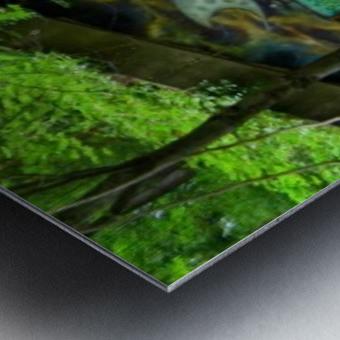 001460_Nikon_ 7 15 12RB3 1 resized Metal print