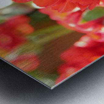 Red Rose Garden Photograph Metal print