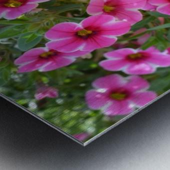 Beautiful Pink Flowers Photograph Metal print