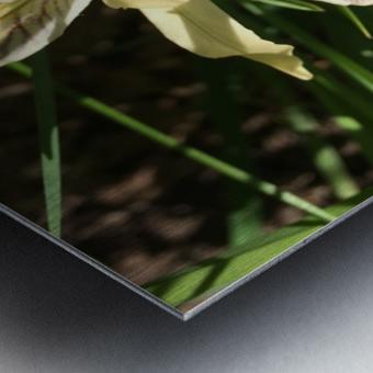 Siskiyou Iris Metal print
