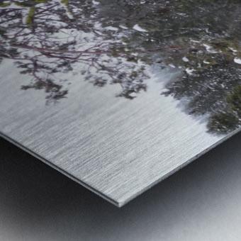 Ancient Mountain Juniper Metal print
