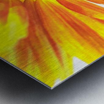 Bumblebee on Sunflower Metal print