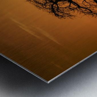 Baobab Sunset Metal print