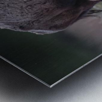 _49R0234 2 Metal print