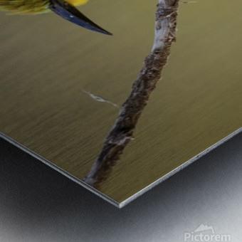164A1450 Modifier Metal print