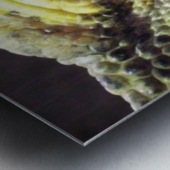 Scale Metal print