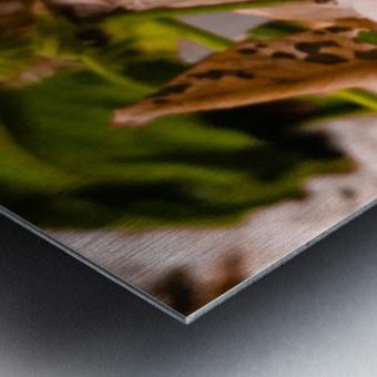 Offerings  Metal print