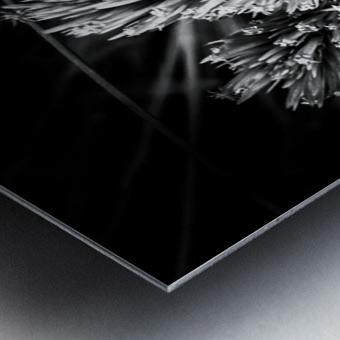 Black beauty  Impression metal