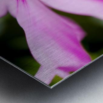 Pink and Flowing Metal print
