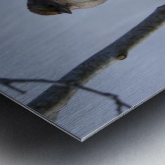 Bundled Up Metal print