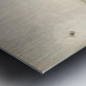 A Fly Metal print