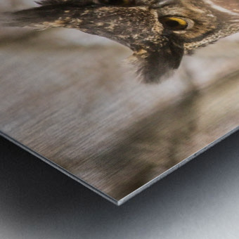 Great horned Metal print