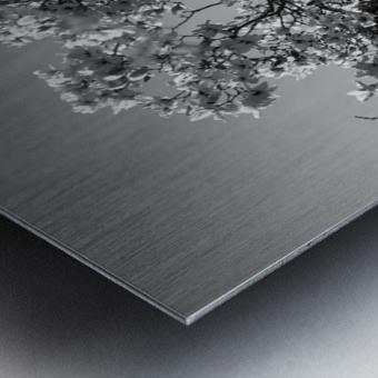 20190316 DSC_0136 2 Metal print