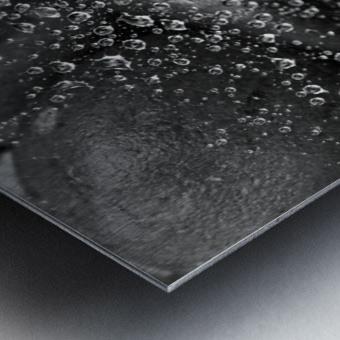 Spiderweb Raindrops B&W Metal print