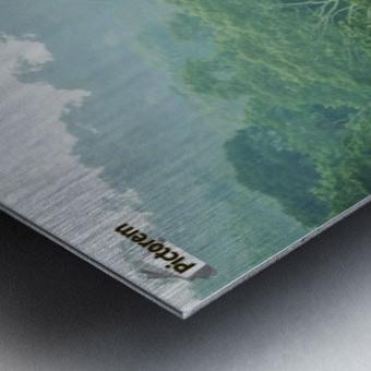 Rainforest Canopy Metal print