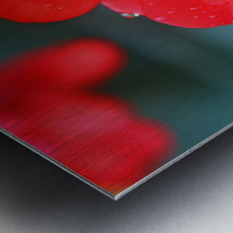 Elegantly Red Metal print