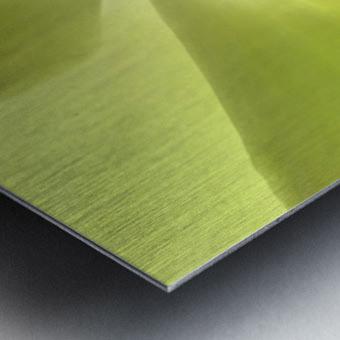 1 IMG_9153 Metal print