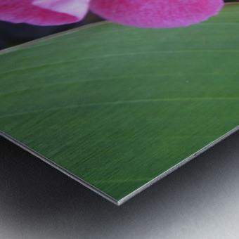 Flower (2) Metal print