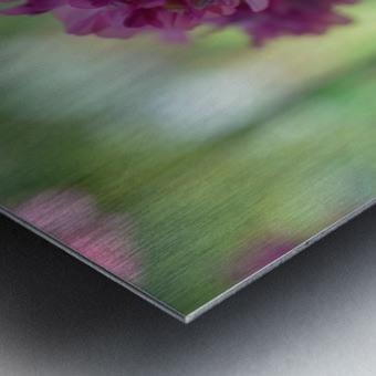 Purple Flowers Photograph Metal print