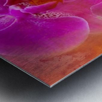 Colorful Phalaenopsis Metal print